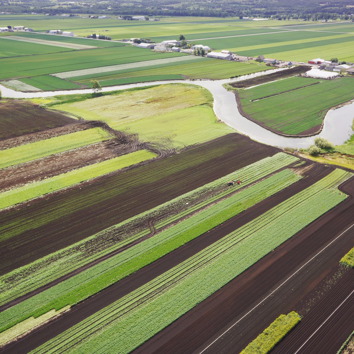 The Growing season is in full swing at the Holland Marsh!  http:// higheye.ca/aerial-imaging -blog/empowering-the-growers-high-eye-expands-ndvi-research/ &nbsp; …  @uofg @UofGResearch #UAV #NDVI $UAV $UAV.C<br>http://pic.twitter.com/SOc9IoPOHE