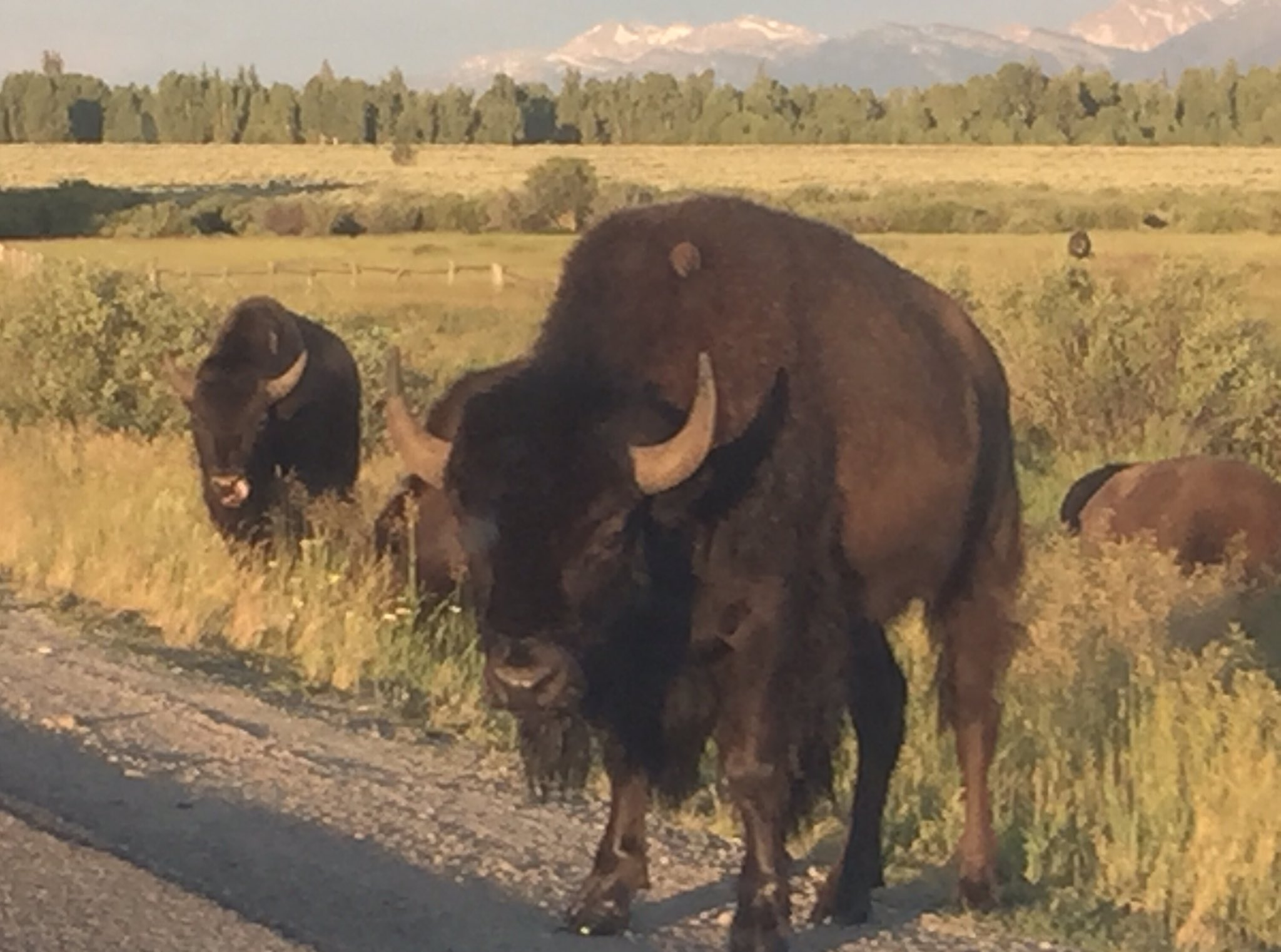 Hi, Jenna signing in from the Mitten State, just returned from vacationing near these beautiful bison! #Wyoming #GrandTetons #MacroSW https://t.co/oM7m8aqmUS