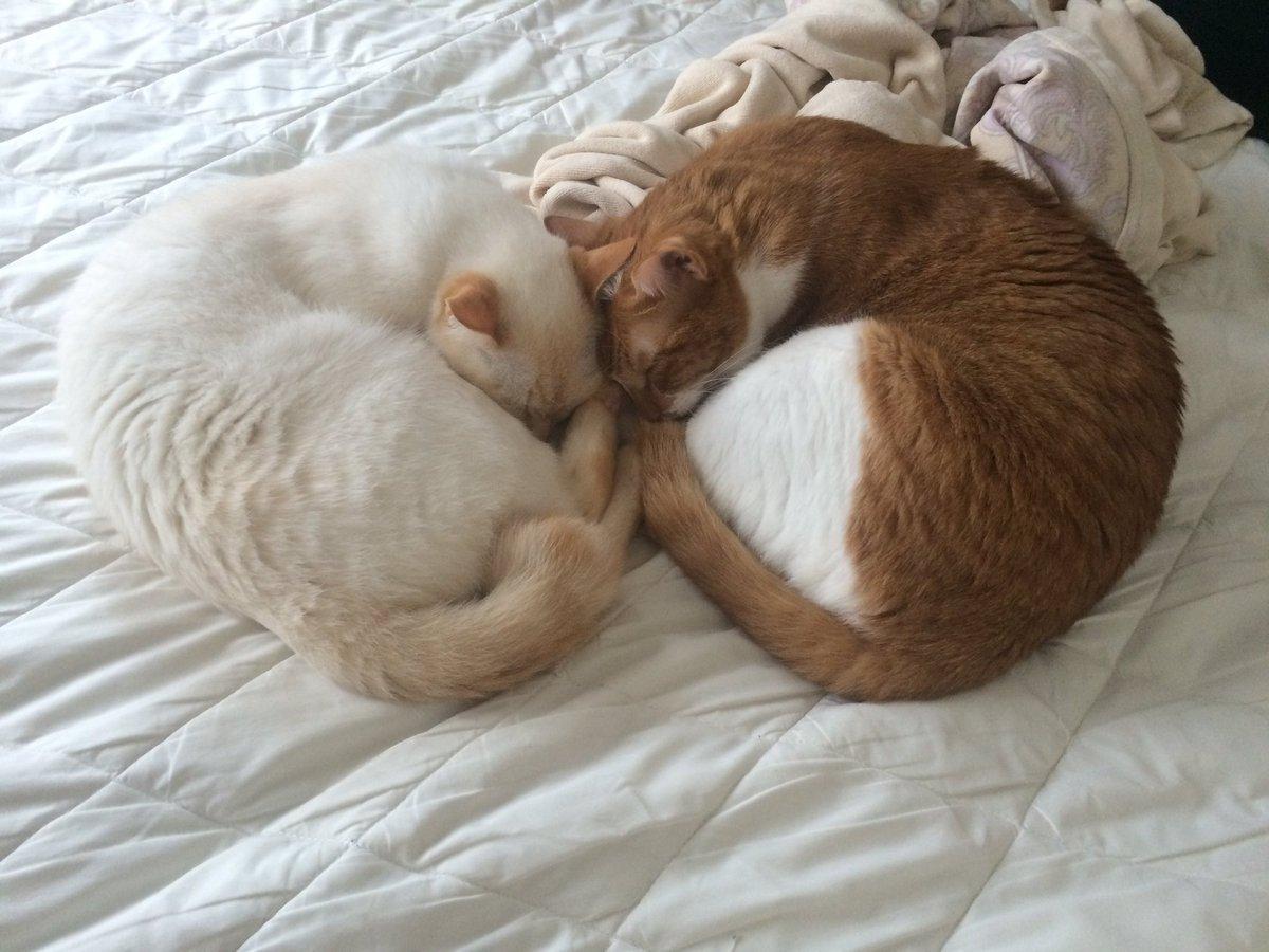 仕事中に送られてきたラブリー仲良し猫たんで今日も頑張れました。 金曜日お疲れ様です(っ´ω`c)