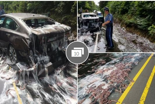 Eel avocado rolls prices are going up!  Truck full of eels overturns, dousing sedan w/ slithering sea creatures https://t.co/tns74GJfHN https://t.co/mXLNZJDCTB