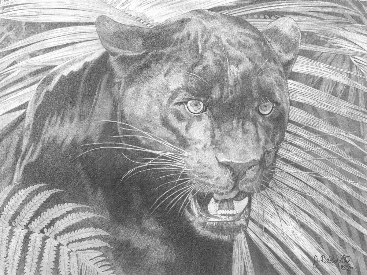 Картинки пантер черных карандашом