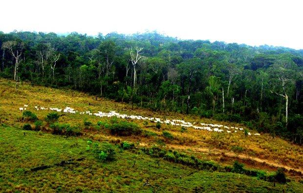 MPF identifica 2,3 mil responsáveis por desmatamento na Amazônia Legal. Ouça: https://t.co/sDMi5wnQEd 📷: Nelson Feitosa/Ibama