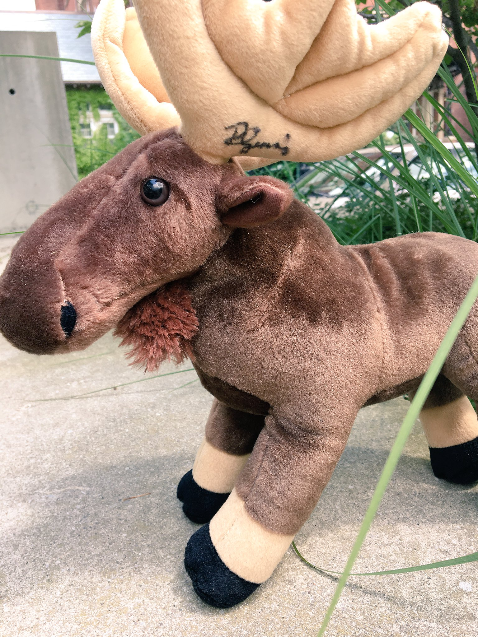 Dear Toronto. I've signed & left moosey here. He's yours if you're quick. https://t.co/oETw1dLja3