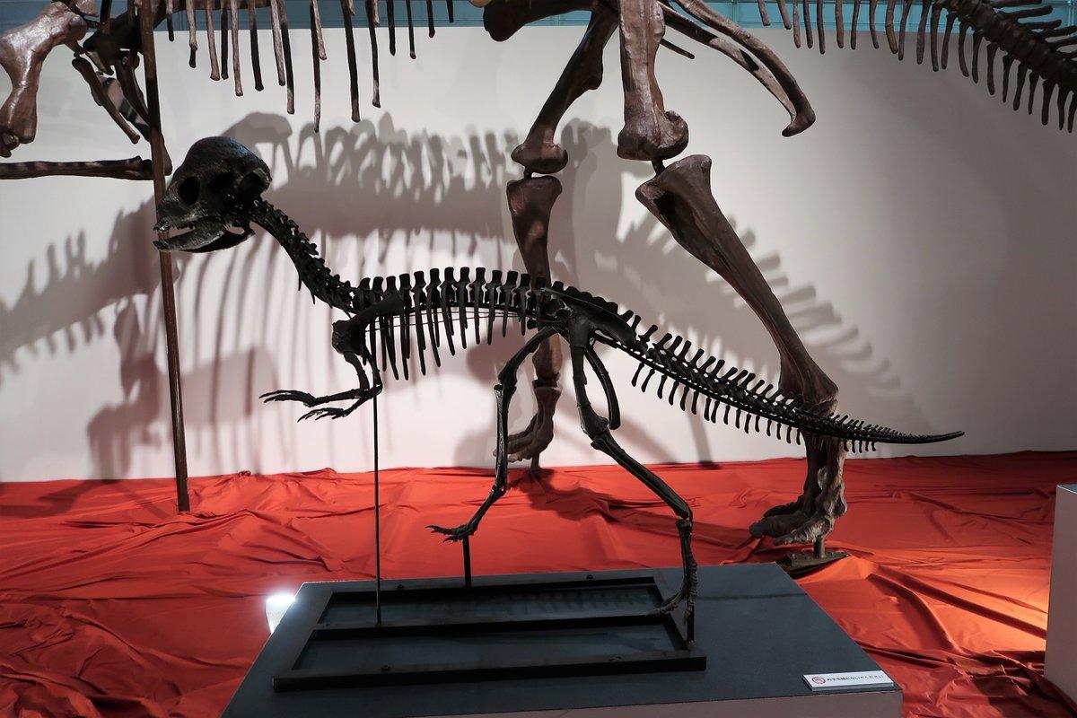 "Asa on Twitter: """"古竜脚類"" 代表:ルーフェンゴサウルス 竜脚類 代表 ..."