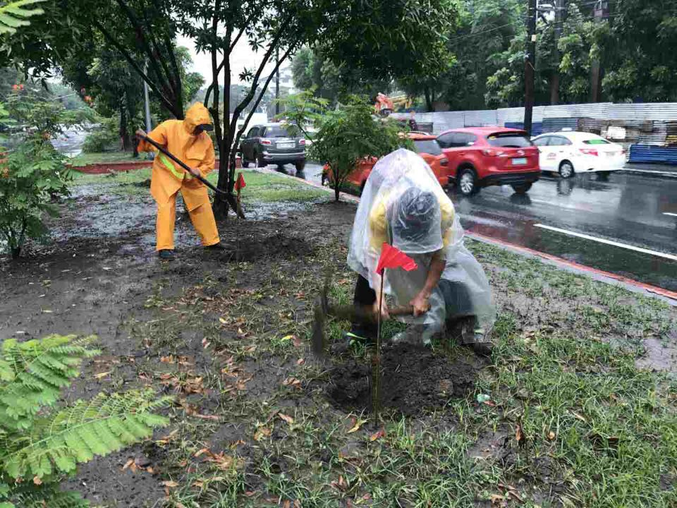 Preparation of hole for planting of donated 5,000 Palm trees along Padre Burgos Center Island, Manila City July 27, 2017.