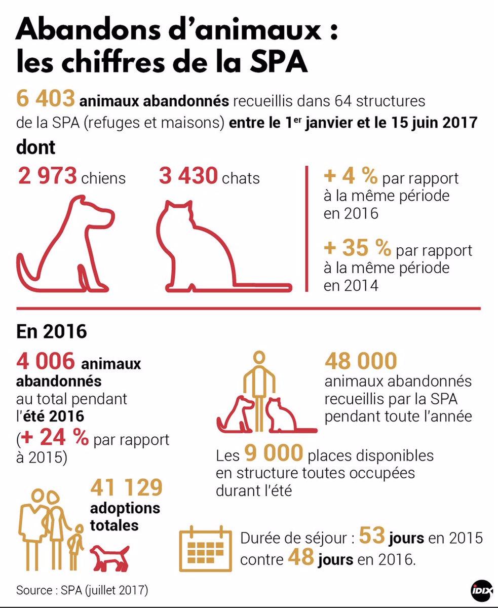 Le #chiffre : + 35% d'animaux abandonnés et recueillis par #laSPA au 1er sem 2017 vs 2014. Une situation alarmante… @IDIX_Presse