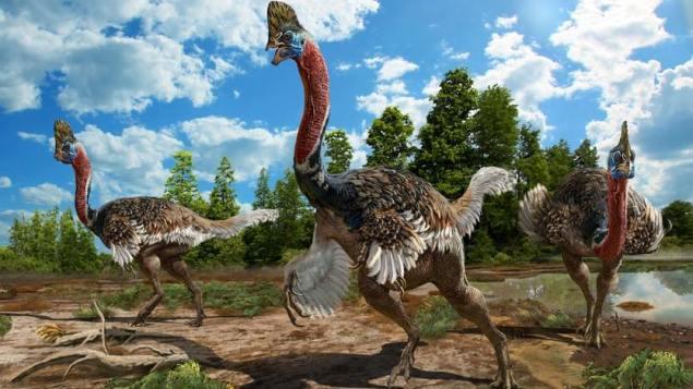 Une nouvelle espèce de dinosaure à plumes découverte en Chine  https://t.co/e9kBfwd72l