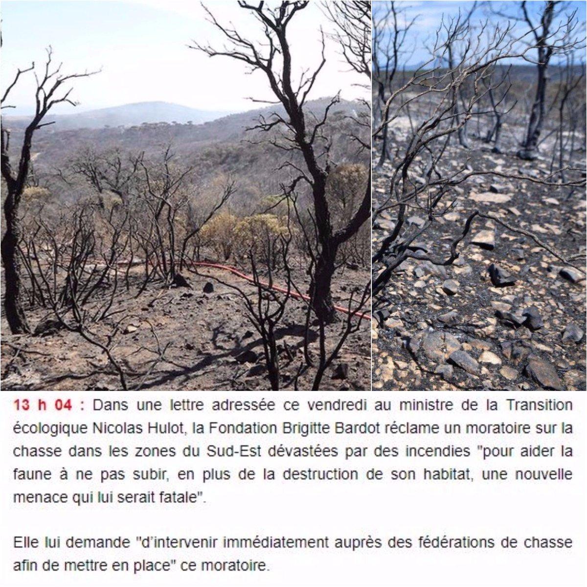 #IncendiesVar : la FBB demande à @N_Hulot d'intervenir auprès de l'ONCFS pour mettre en place un moratoire sur la chasse (dépêche AFP)