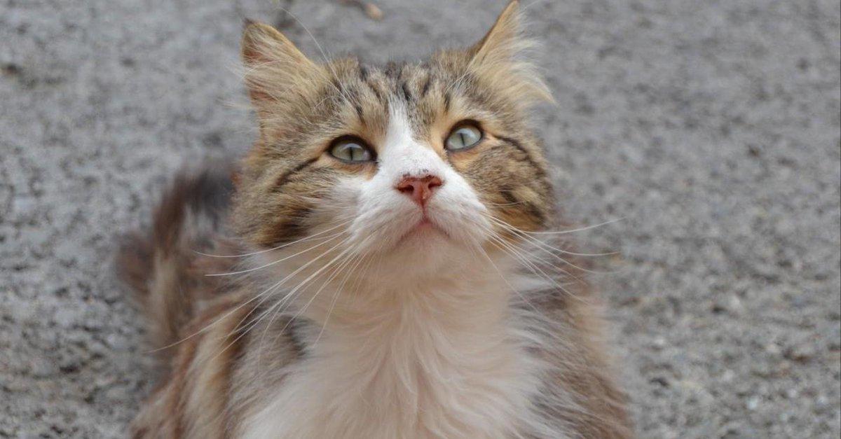 Draguignan : l'affaire du chat Chevelu, torturé à mort, enfin élucidée https://t.co/ZogyhBVYgB
