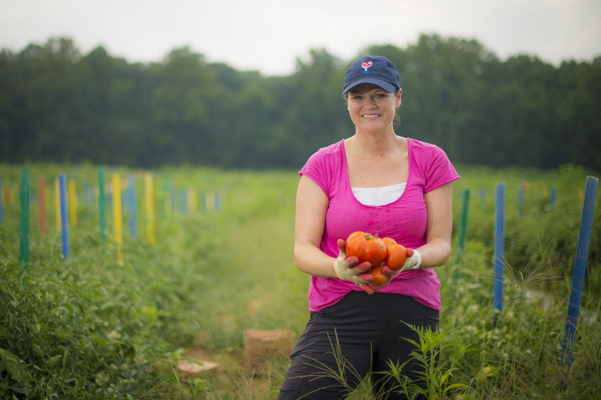 USDA employees came to Miller Farms in Clinton, Md., to pick tomatoes & squash today for Feds feed families- @TKOHUNGER