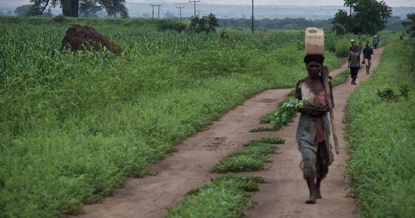 Les «hyènes» du #Malawi: «Au début, tout le monde niait l'existence de cette coutume» https://t.co/CWzmaS8L0V