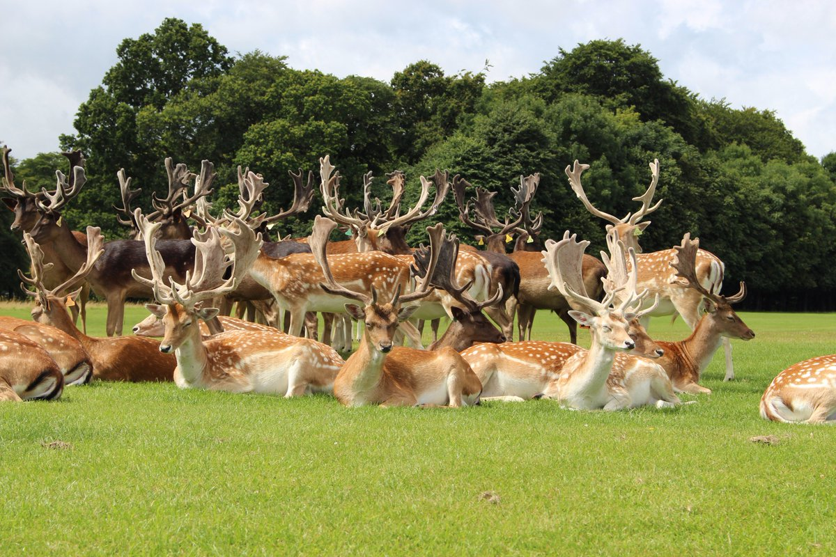 Phoenix Park On Twitter The At 707 Hectares 1752 Acres Is One Of Largest Enclosed Recreational Spaces Within Any European Capital