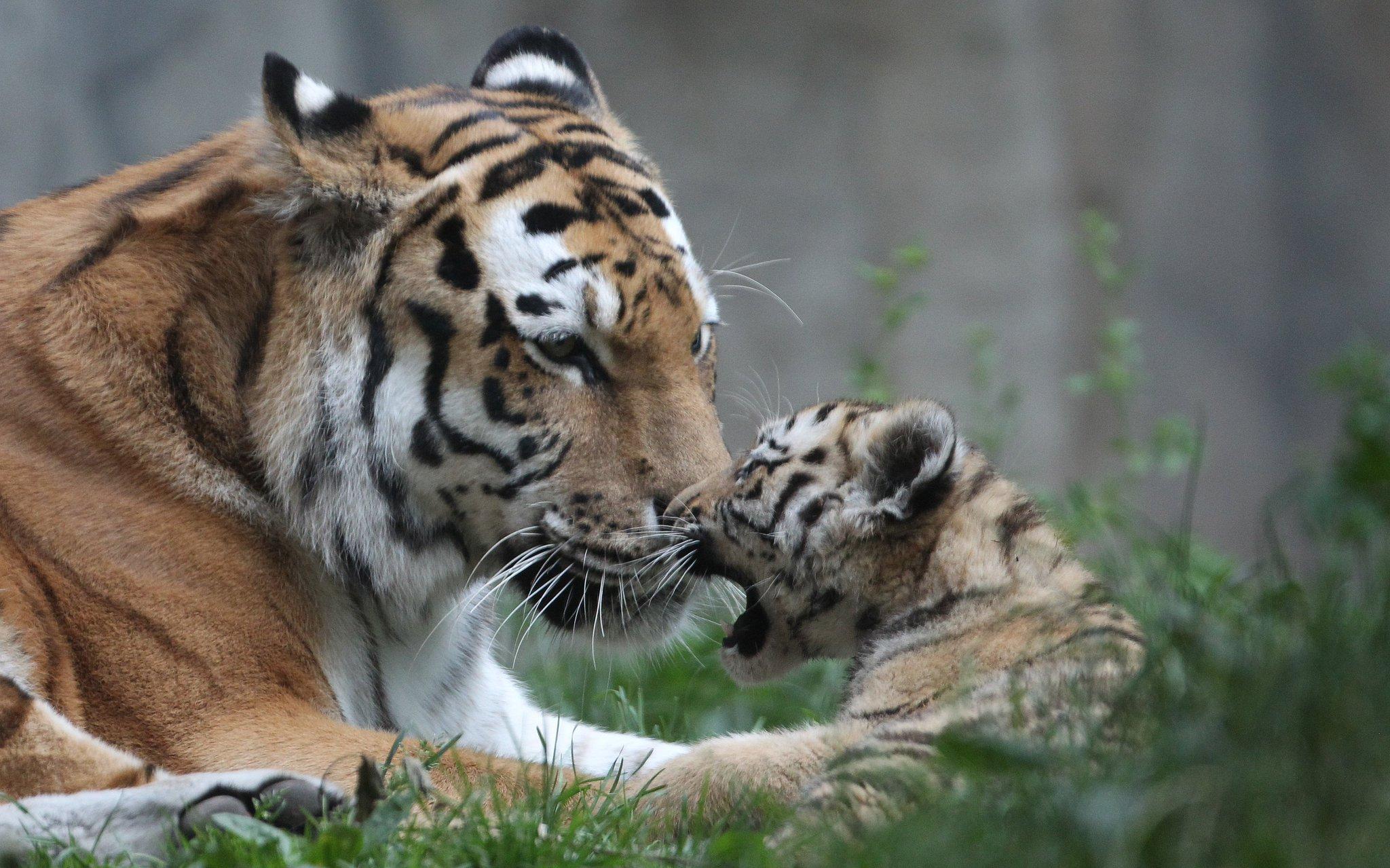Картинки день тигра, картинка пьяный мужик