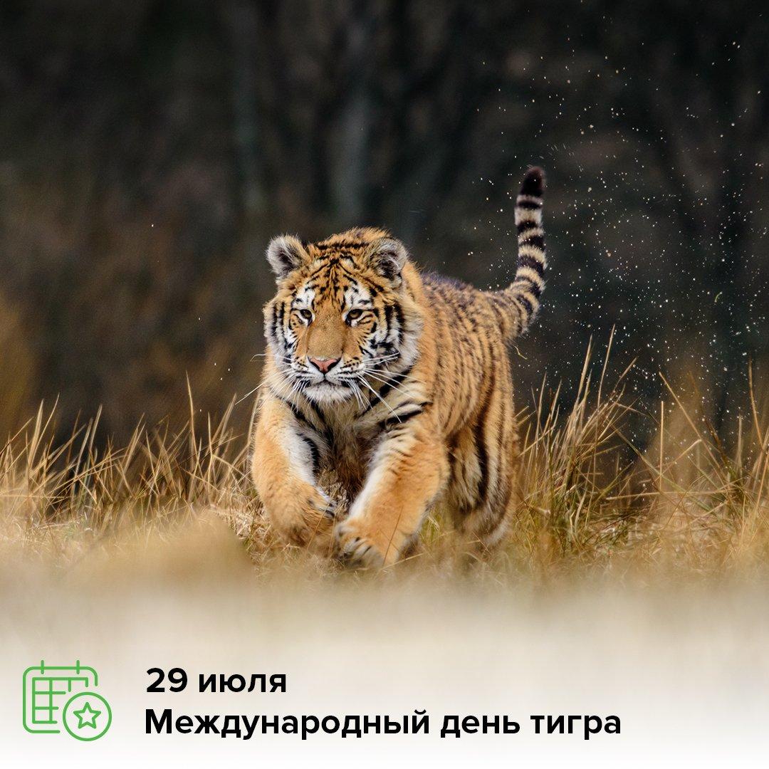 Открытки тигр картинки, картинки надписями убери