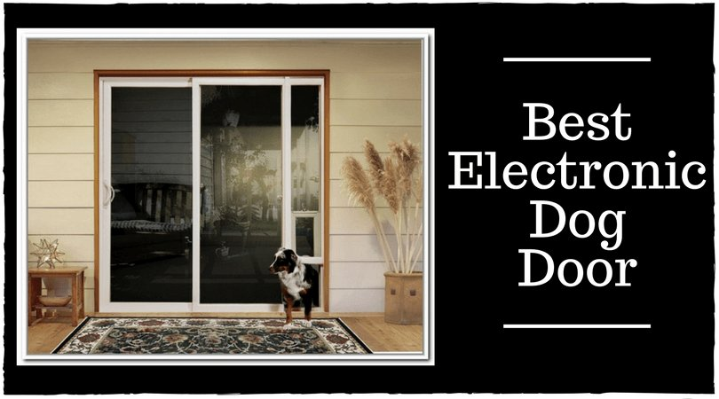 Electronic Dog Door Edogdoorb Twitter