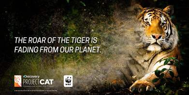 This #GlobalTigerDay, help @DiscoveryComm and @WWF protect wild tigers at https://t.co/VHO5ma88T8 #ProjectCAT https://t.co/TbXfsZeXCm