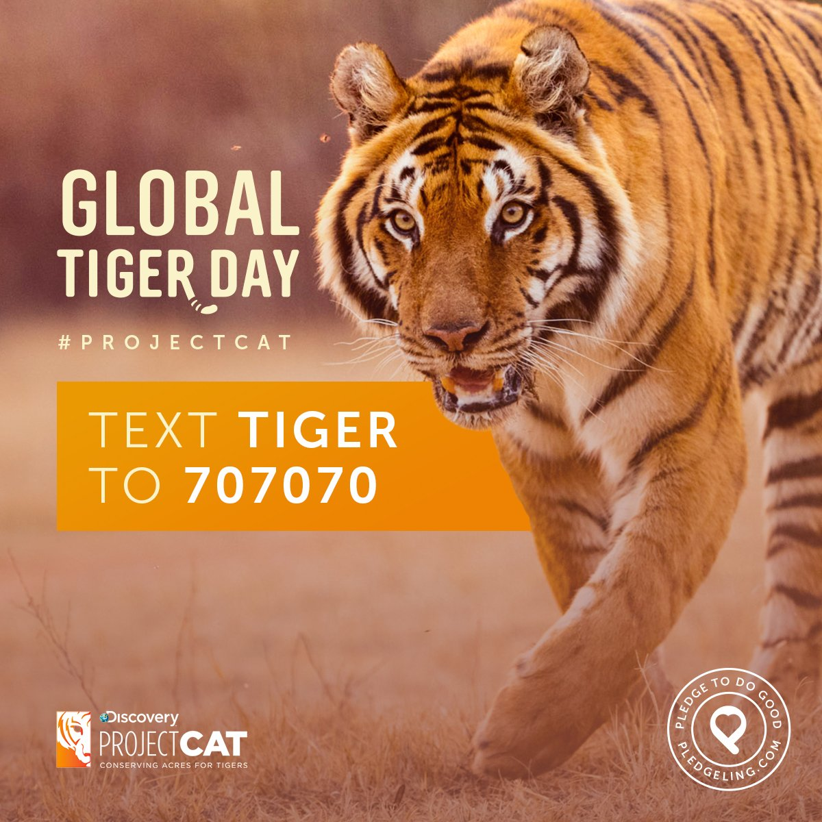 Pledgeling On Twitter Only 3890 Wild Tigers In The World Help DiscoveryComm WWF Protect Them Text TIGER To 707070 ProjectCAT PledgeToDoGood