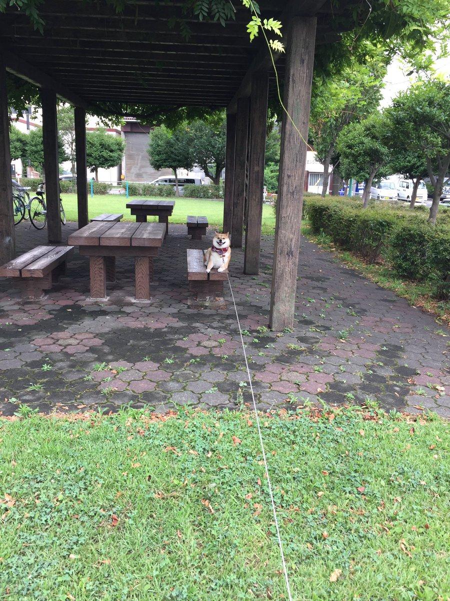 アタシね、この公園気に入ったから帰らないよ💨💨