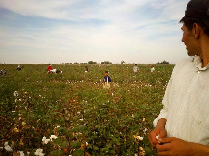 .@ilo response @FT 2 criticism its monitors of forced labor in #Uzbekistan cotton harvest are not independent @HRW https://t.co/HLqHb3tSaC https://t.co/fiSlXa9puF