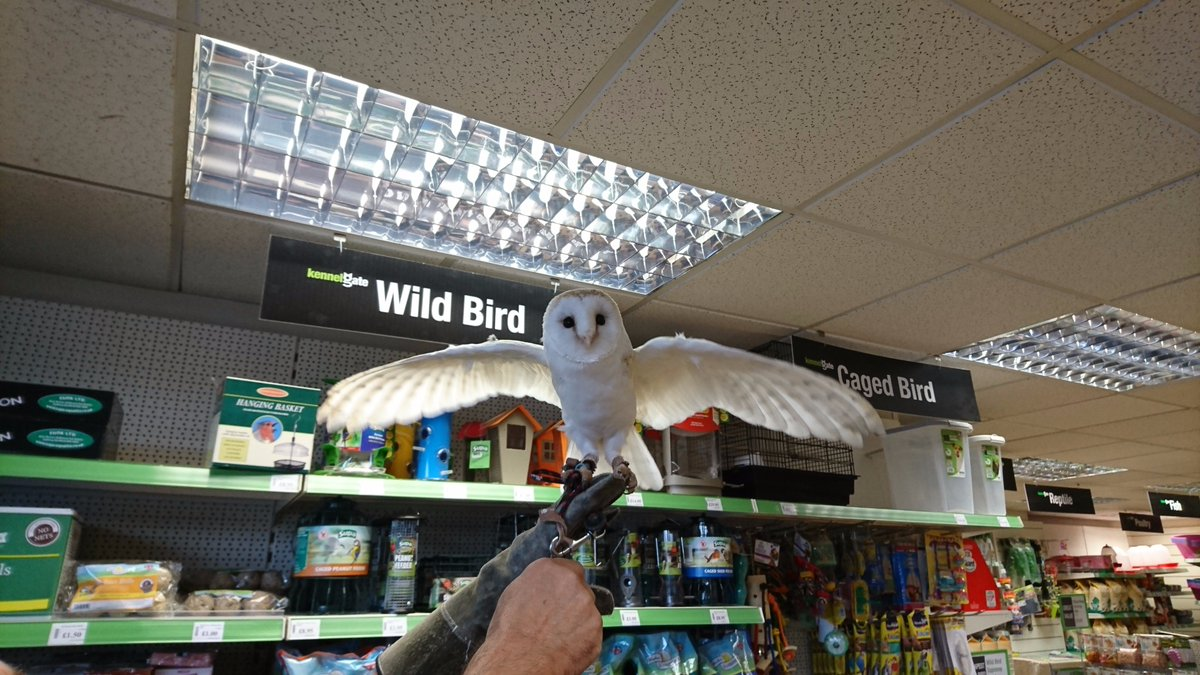 Proof that it&#39;s not just dog&#39;s that like to visit our stores! This is Alfie the #BarnOwl on a recent visit to our #Chilwell store! #petshop <br>http://pic.twitter.com/d2uasny7XD