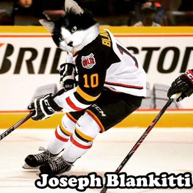 Image result for a very barrie colts blog joseph blandisi