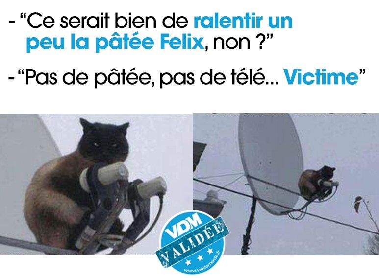 'Ce serait bien de ralentir un peu la pâtée Felix, non ?'  #VDM #viedemerde #chat #pasdetélé #victime #Felix