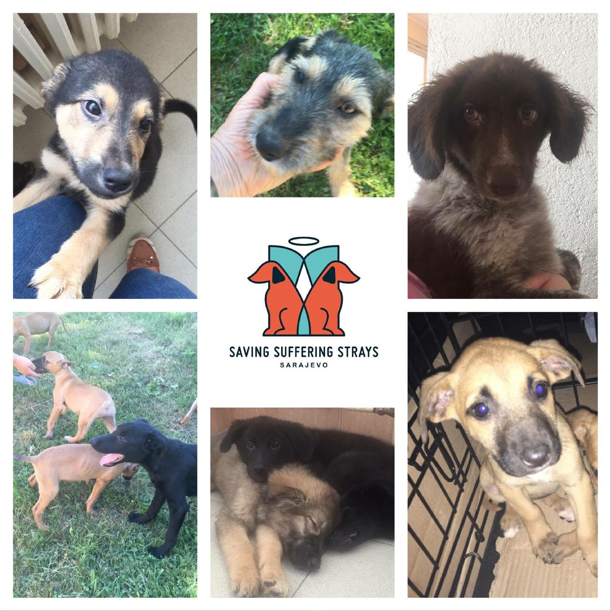 #AdoptDontShop #lots of puppies for ADOPTION #please DM @StraysSarajevo for info #easy Adoption process #satisfaction guaranteed <br>http://pic.twitter.com/GlYVxO4XDC