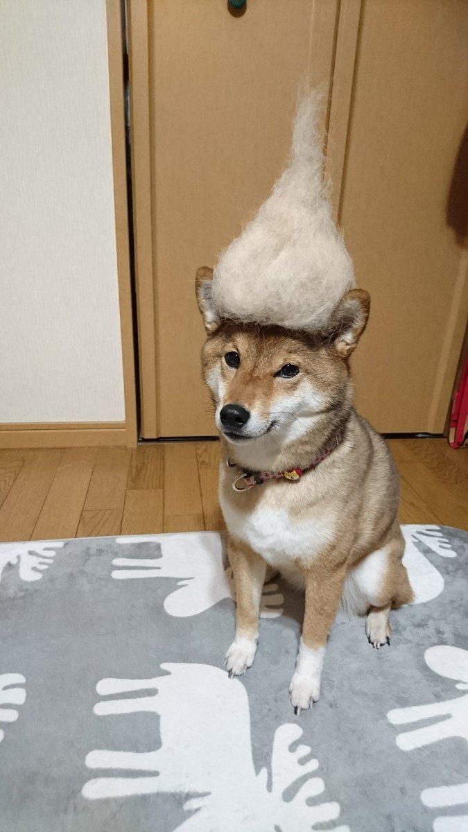 抜け毛 柴犬