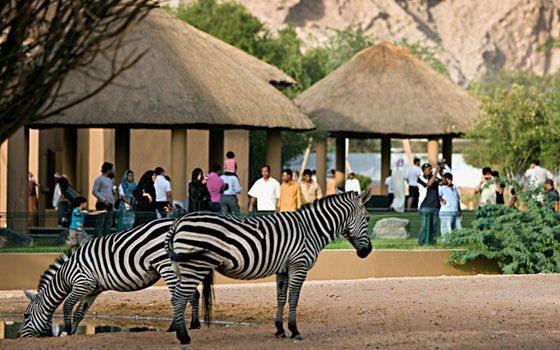 Twitter पर عمر في الإمارات أهم حدائق الحيوانات في الإمارات سفاري دبي قريبا حديقة حيوان الشارقة سفاري العين أبوظبي حديقة أم الإمارات
