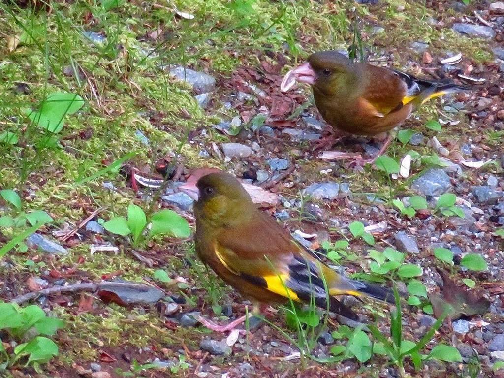 www birds