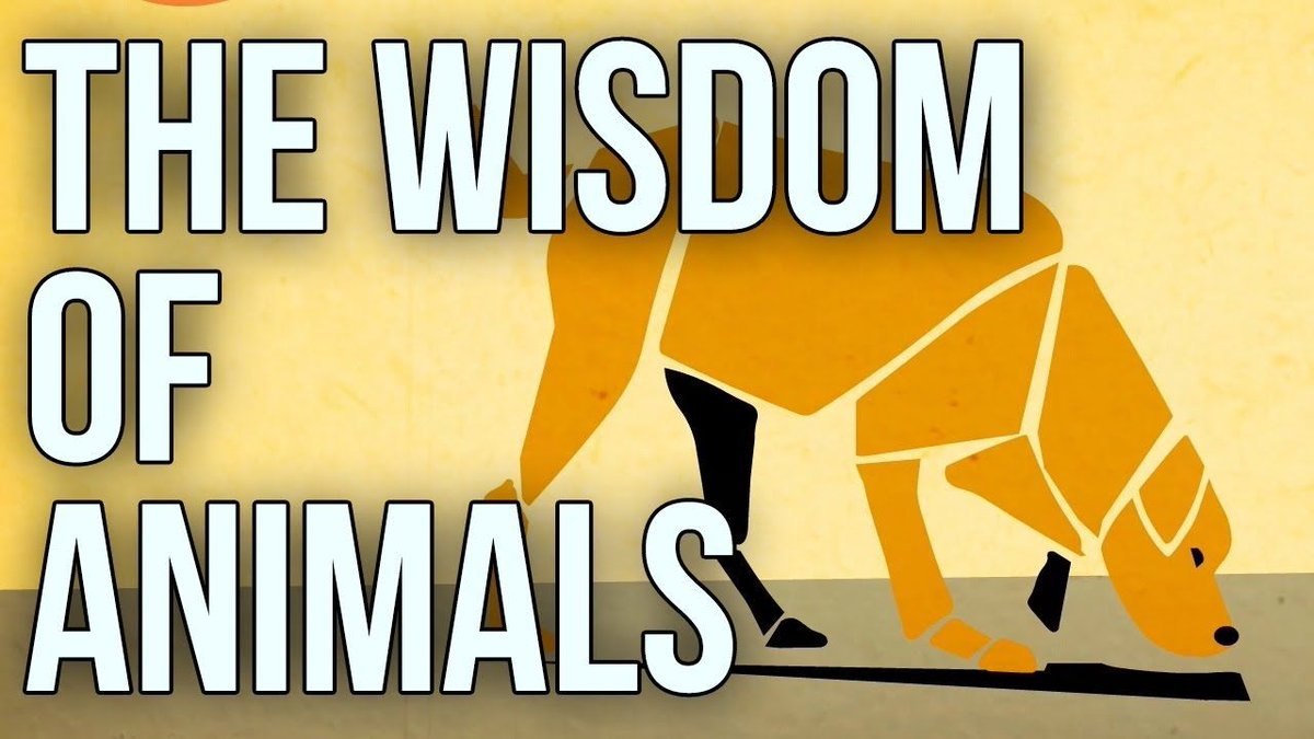 #animals have much to share about #wisdom if we are ready to take their quietly-delivered #lessons  #time #presence   https:// 1o1.gt/2rW7wPR  &nbsp;  <br>http://pic.twitter.com/DoAHjiW5ux