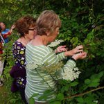 We may not pick wild raspberries on Thursday but I am sure it will be a good walk.