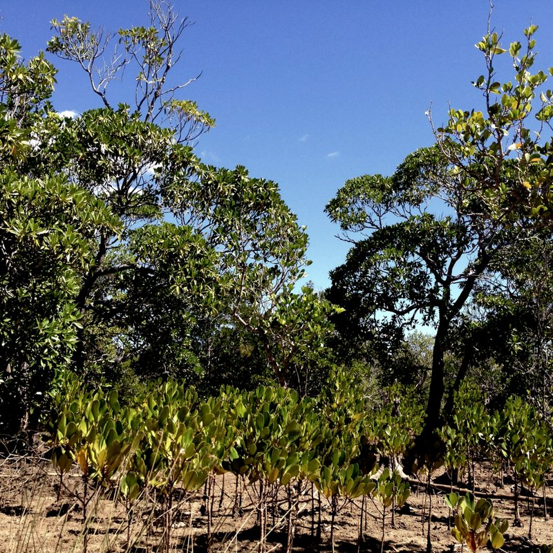 Recent pictures from our planting sites in #Madagascar. Here we&#39;re reforesting both mangrove and deciduous forests with @eden_reforest<br>http://pic.twitter.com/wxn4jYIUqS