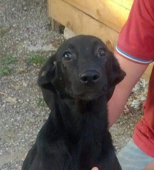 #AdoptDontShop #little SANDRA rescued from Praca #please DM @StraysSarajevo for info #easy adoption process  <br>http://pic.twitter.com/Cr2Kakn6wg