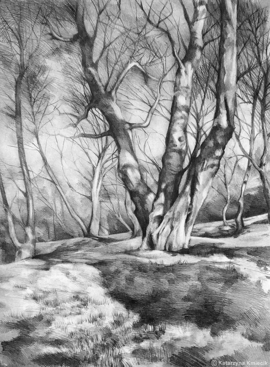 First #drawing of #trees that I&#39;m pround of (2007). Available as a #print  http:// etsy.me/1TPs3ic  &nbsp;   #pencil #sketch<br>http://pic.twitter.com/Z1wgcYZVcO