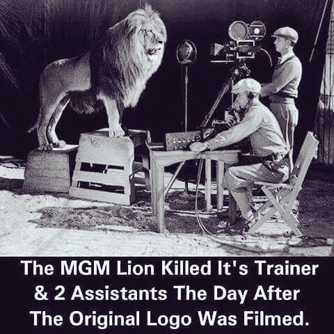 Mgm lion killed trainer yahoo dating 8