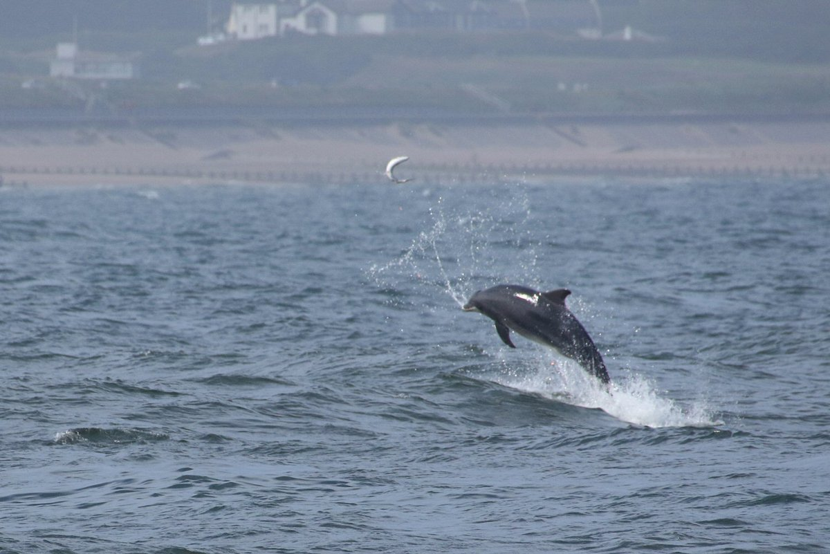 now, THAT is a #flying #salmon! #dolphins on the hunt at #Aberdeen today<br>http://pic.twitter.com/s7YFkKP852