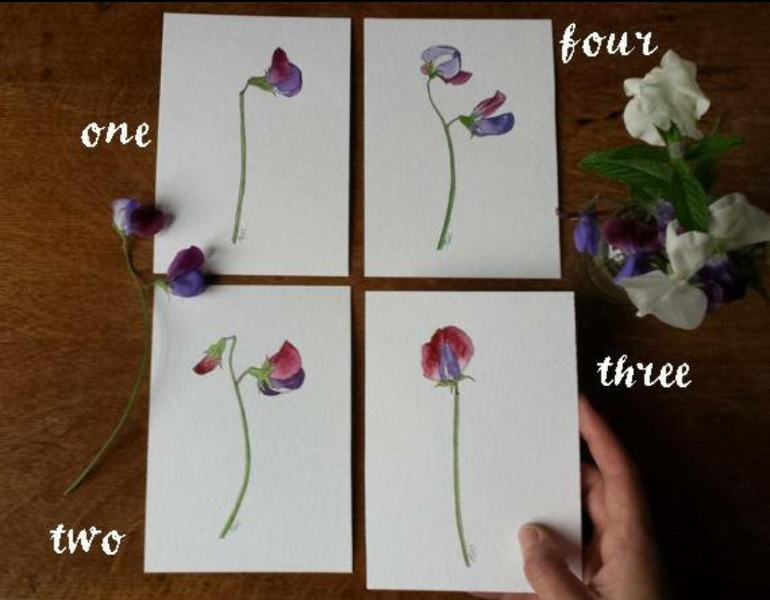 I&#39;ve decided to sell some of original #sweetpea studies-all now in the shop! #HandmadeHour  https://www. etsy.com/uk/listing/527 989804/a6-original-modern-botanical &nbsp; … <br>http://pic.twitter.com/i75gTJHF9l