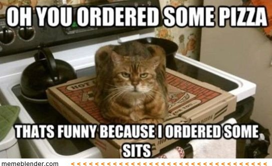 No one is having my box. Forget it human.  #Cats #Catsoftwitter #Meow #JustSaying <br>http://pic.twitter.com/8tVroE3mHf