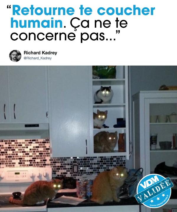 Ça ne te concerne pas humain... 😈 #VDM #viedemerde #chat #evilcat #jaipeur