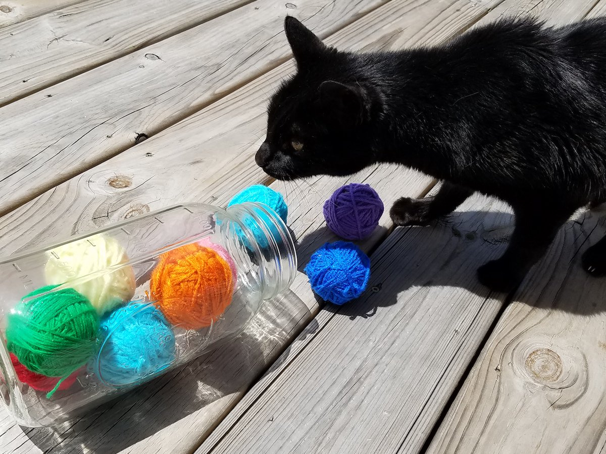 How to make the easiest homemade cat toys that every kitty loves!   Get the DIY tutorial here →  http://www. babysavers.com/easy-homemade- cat-toy/ &nbsp; …   AD #DIY #tutorial <br>http://pic.twitter.com/GxiyY1dybu