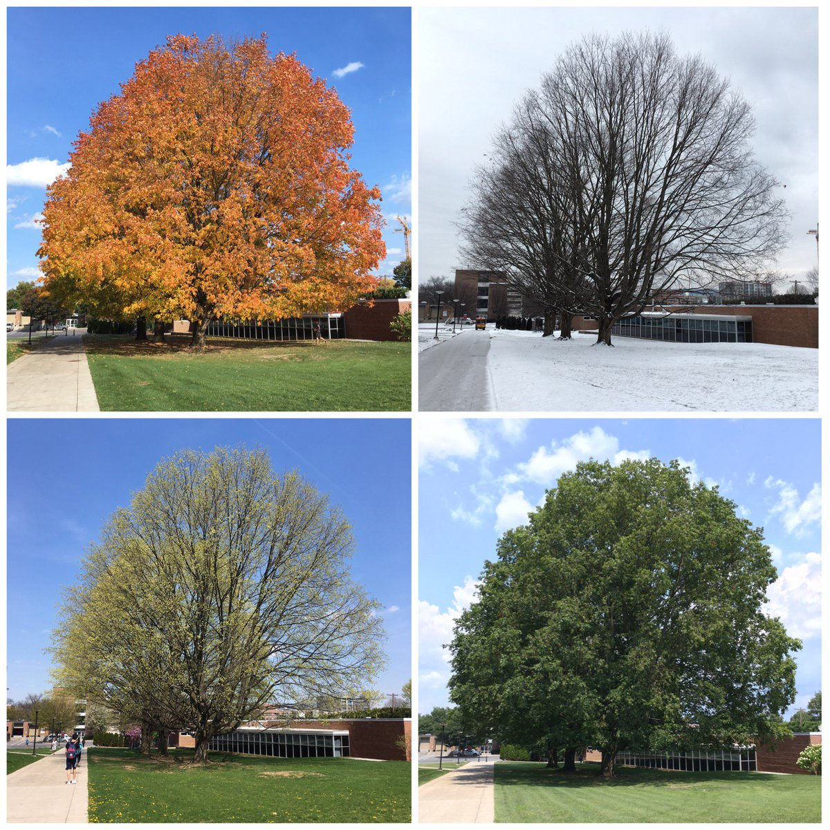"""Weather World on Twitter: """"One tree. Four seasons. The"""