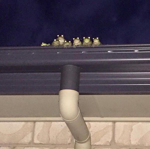 You never know when a #frog #family is watching you.....<br>http://pic.twitter.com/I4yeMNpfHk
