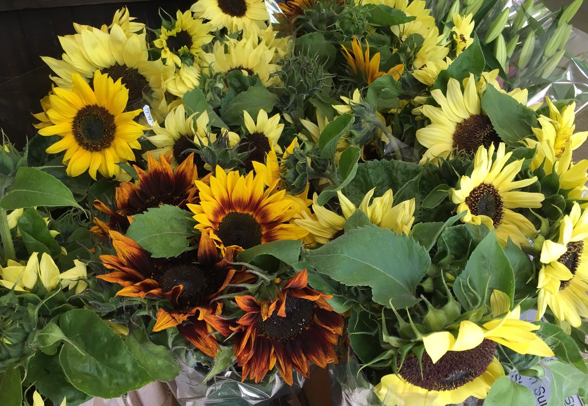 Brighten up your day with a bunch of our grown #Sunflowers #shoplocal<br>http://pic.twitter.com/4BhO9FpUd9