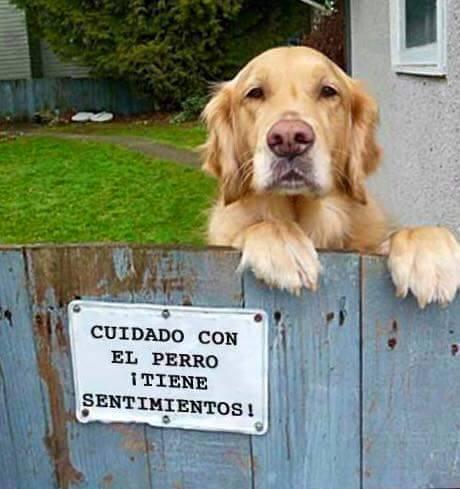#FelizJueves y felices los animales que tienen quienes les defienden 😀...