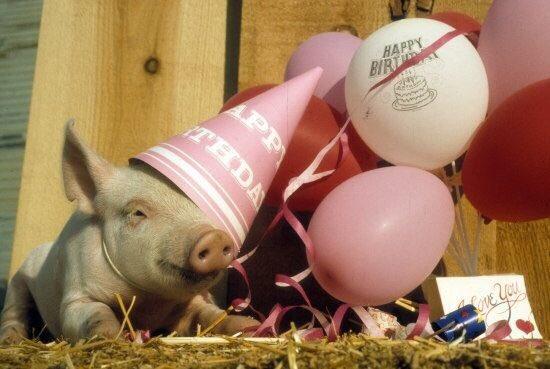 Открытка с днем рождения со свинкой