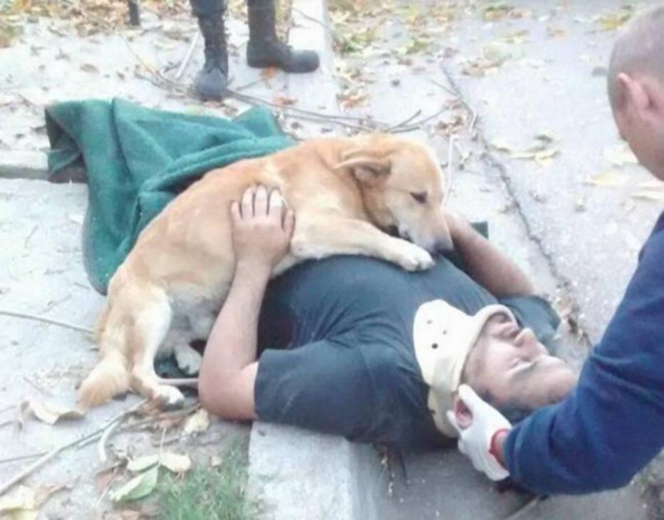 #DiadoAmigo: Veja motivos pelos quais o cão é o melhor amigo do homem...