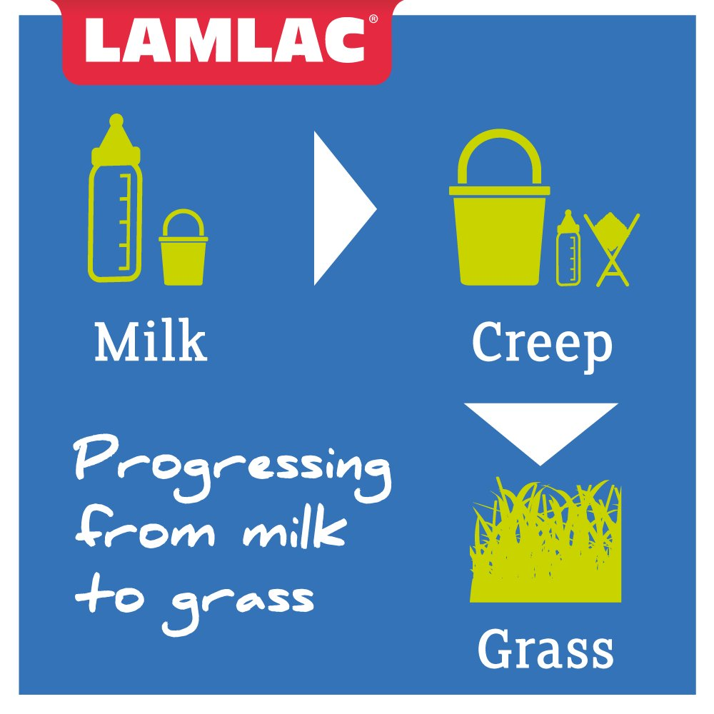 Progressing from milk to grass - Comment below on your technique!  #lambing17 #sheep365 <br>http://pic.twitter.com/2JHTCmJ5oQ
