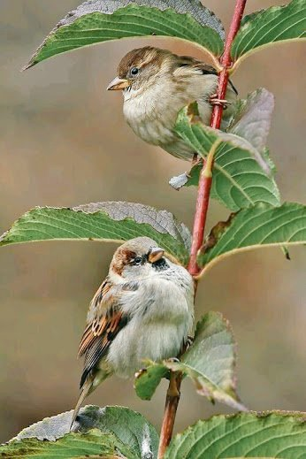 Beautiful #Birds of our #Planet #Earth #Brdiing #BirdWatching<br>http://pic.twitter.com/PDHMEmUGnl