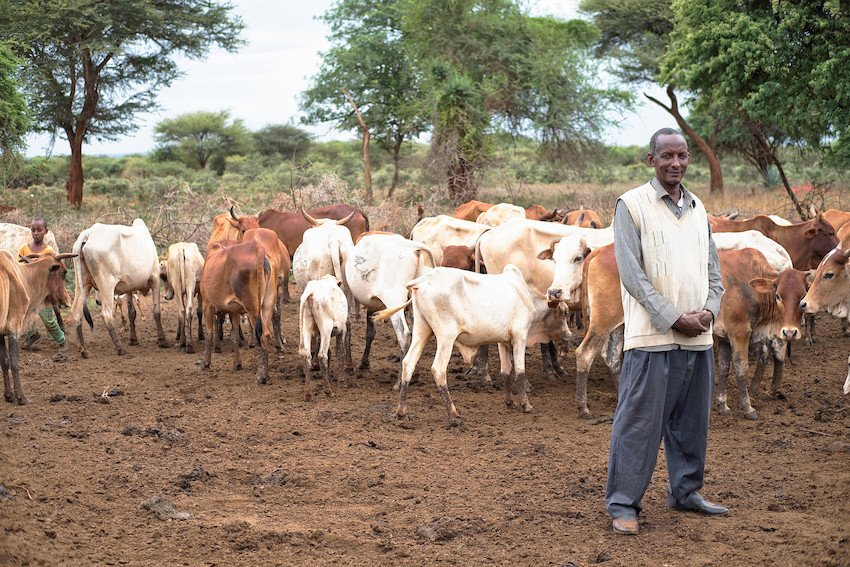 Farming and livestock sectors bear more than 80% of the damage and losses caused by #drought  http:// tmsnrt.rs/2uDeX2i  &nbsp;   #globaldev <br>http://pic.twitter.com/3O100ZLec6